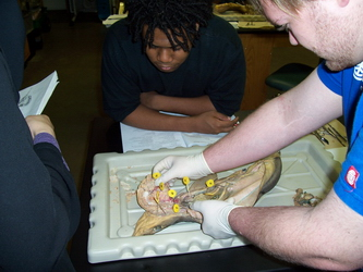 Comparative Anatomy students quiz one another on the shark circulatory system (2006)