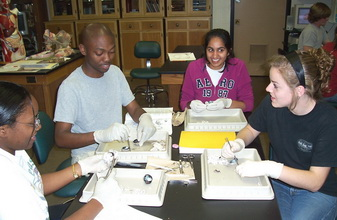 Comparative Vertebrate Anatomy lab