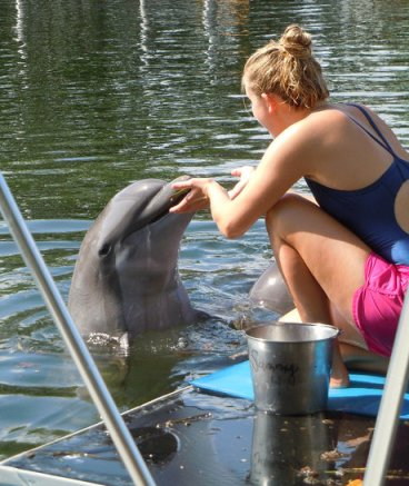 Kristi Prevost working with dolphins