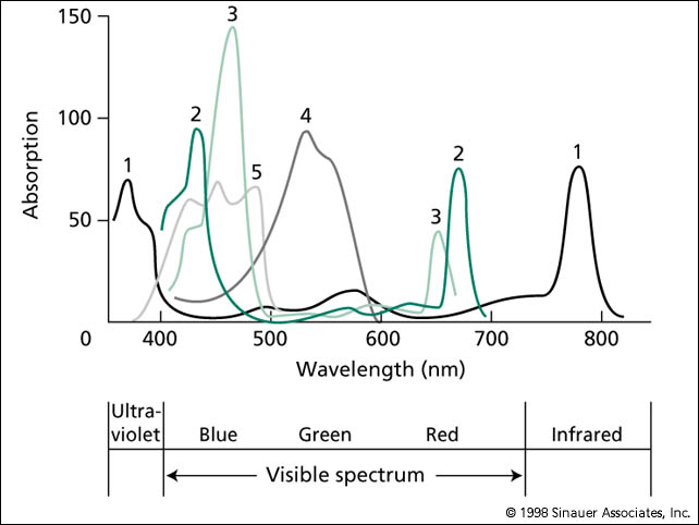 absorption spectra Absorption spectra in the visible and uv region of potassium permanganate and  potassium manganate in solution and their application to the analysis of.